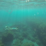 Snorkeling Fajã Grande